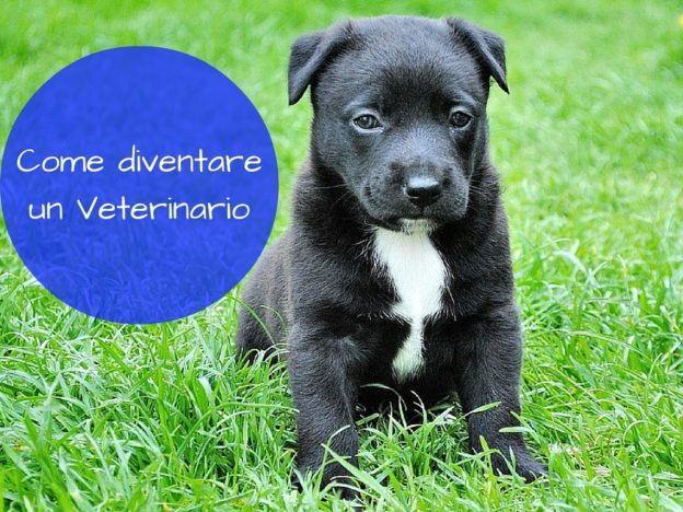 Come diventare un Veterinario